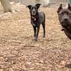 black dog (who)