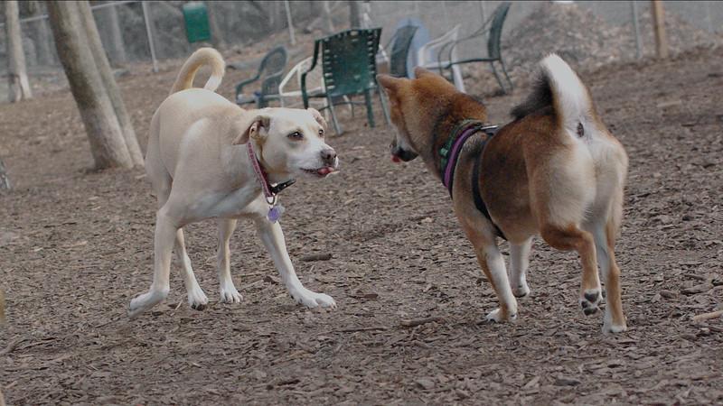 TRIXIE & FOXI 2