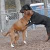 Zoe (boxer), Eubie (rottie boy)
