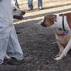 Bailey (young), Bubba (boxer)