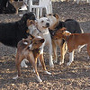 Bailey (young), chloe, maddie, oliver