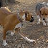 CHLOE (boxer), Chelsea (beagle)