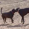 Diesel & Charlie (black)