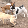 ARI (romeo guest), Marley, boxer guest