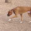 Boxer (bobo guest, maybe OSCAR)