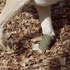 BARNI (surgery bandage)