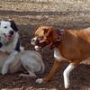 Bailey (younger), Marley (boy pup), ZOE