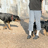 EUBIE (rottweiler), Jackie (rottie pup)