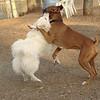 BOBO & OSCAR (boxer) 2