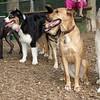 Bailey, Oliver, Buffy, Maddie, shadow_3