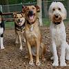 Bailey, Oliver, Buffy, Maddie_1