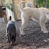 Ari, Faith (terrier)_1