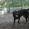 DANTE (black lab boy)_6