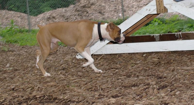 Bubba (boxer)_1