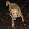 CHARLY (dingo)_3