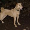 CHARLY (dingo)_5