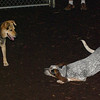 LULU (hound girl), Maddie_1