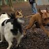 Ebberston, Marley, Maddie_00001