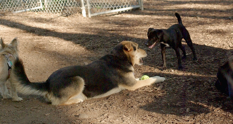 Faith (terrier), Maddie_00001