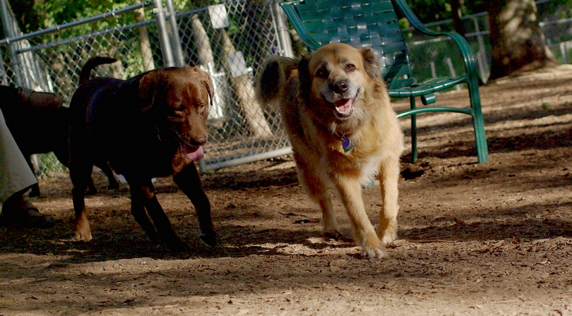 Angel (6 yrs), Scout (brown)_00001