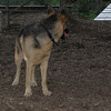 Buddy (shepherd, visit)_00003