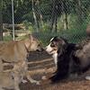 bear (girl), lola_00001