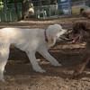 Ethel, Lucy (poodles)_00002