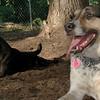 CALI, FAITH (terrier)_00001