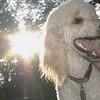 ETHEL (poodle)_00001