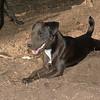 FAITH (terrier)_00002