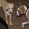 Bubba, Gracie (pup)_00001