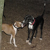 Cassius (new great dane pup), Bubba_00001