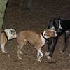 cassius (new), bubba, buddy_00001