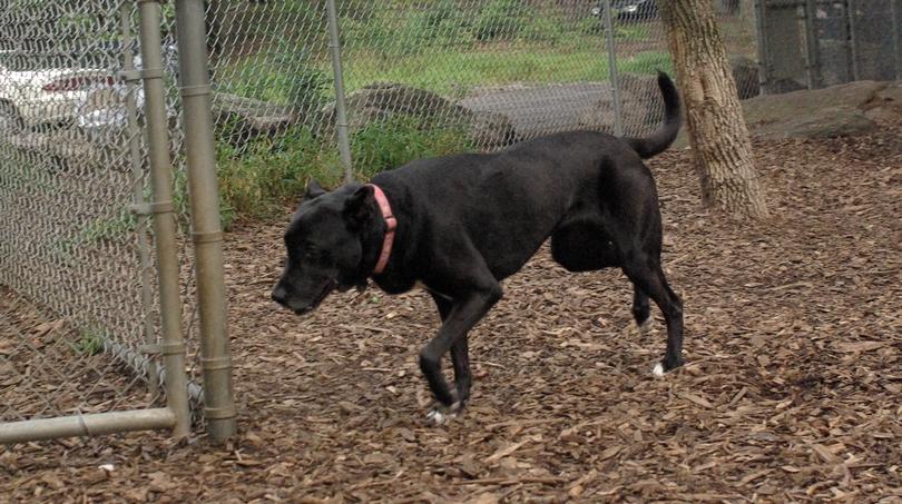 Bela ( charley dingo friend)_00001