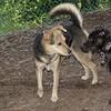 Brandy (puppy), Maddie_00002