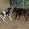 Brandy (puppy), General (puppy)_00003