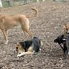buffy, maddie, chloe, faith (terrier)_00001