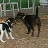 Brandy (puppy), General (puppy)_00001