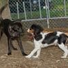 Brandy (puppy), General (puppy)_00002