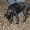Brandy ( new puppy)_00001