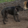 Brandy (puppy), Maddie_00001