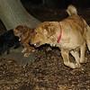 Ginger, charlie 2, Abby_00001