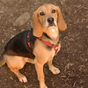 Daisey (pup)_00004