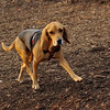 Daisey (pup)_00002