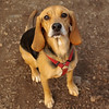Daisey (pup)_00003