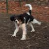 GENERAL (puppy)_00002