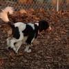 GENERAL (puppy)_00001