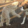 Bixby (puppy), Travis_00002