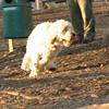 BIXBY (puppy)_00001