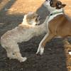 Bixby (puppy), Travis_00004